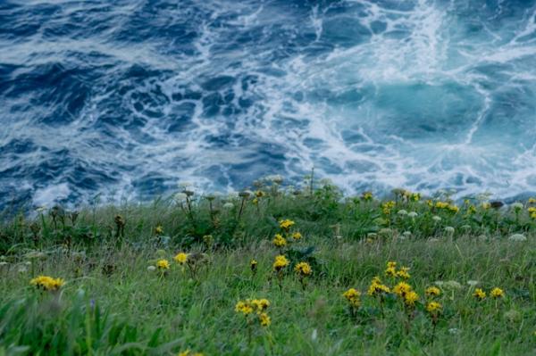 落石岬の崖