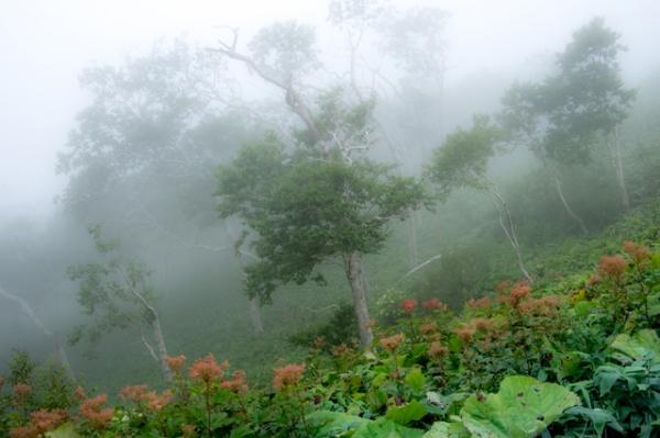 霧の摩周湖にて