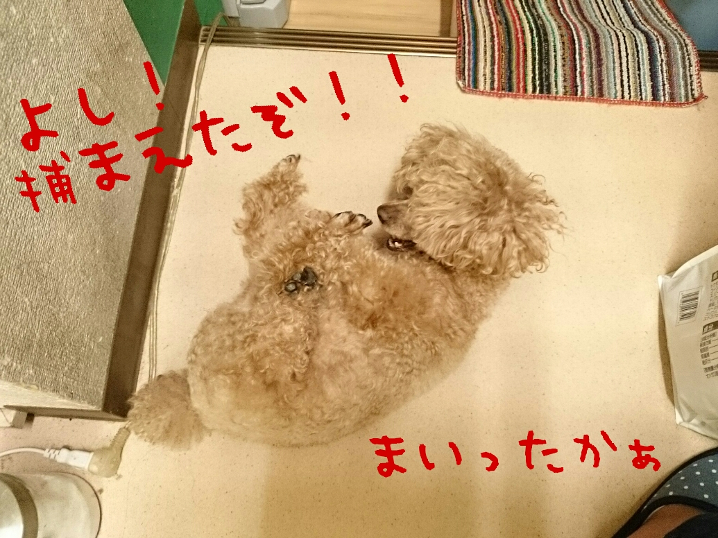 20160622011118fae.jpg
