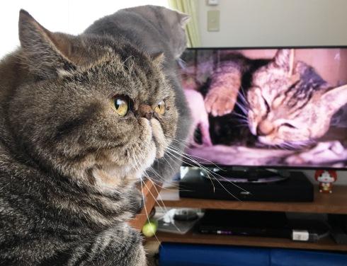 16)テレビで見てもおもしろいお顔れつねー