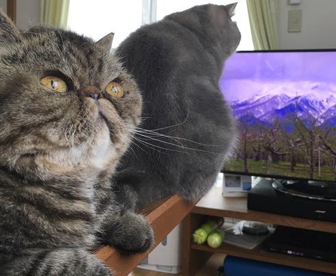 17)テレビの方がカワエエでつかー