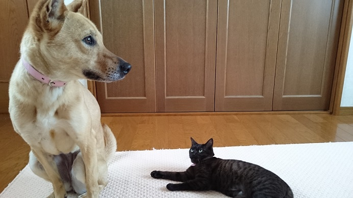 マリリンと保護猫ジジ2