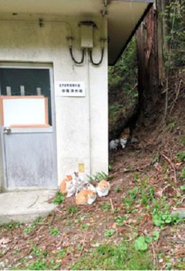 長野県猫遺棄山中で何者かに遺棄されたとみられる猫たち1
