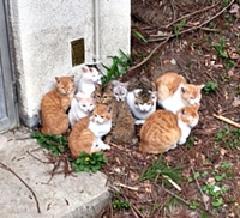 長野県猫遺棄山中で何者かに遺棄されたとみられる猫たち2