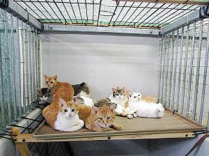 長野県猫遺棄山中で何者かに遺棄されたとみられる猫たち3