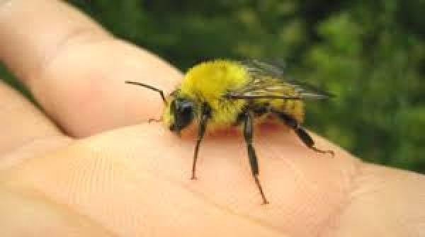 ミツバチ5
