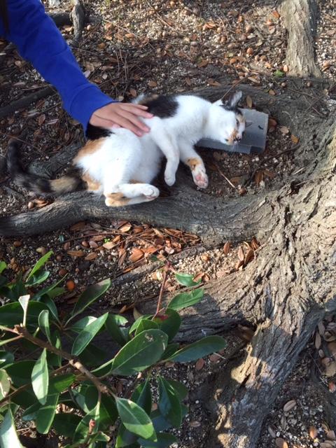 パトロール先の猫ちゃん2
