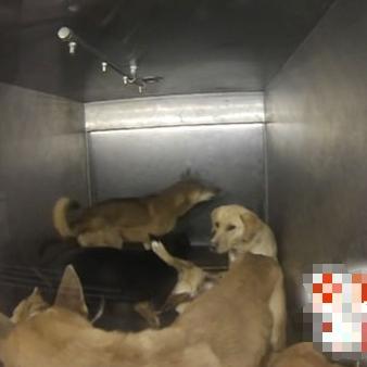 殺処分の檻の中の犬達