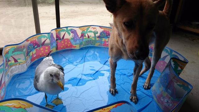 マリリンと一緒に水遊び