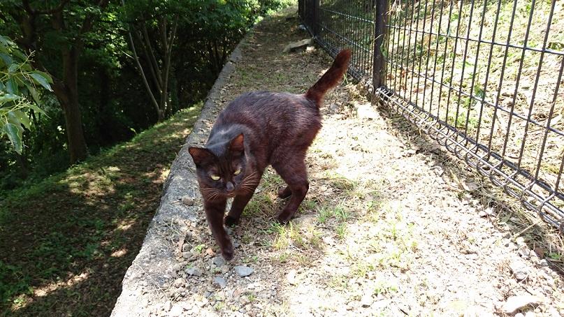 美和さんが保護した子猫ジジのお母さんで、4歳くらいです。賢くいつも上手に子育てしていますが、子猫たちは全て行方不明です