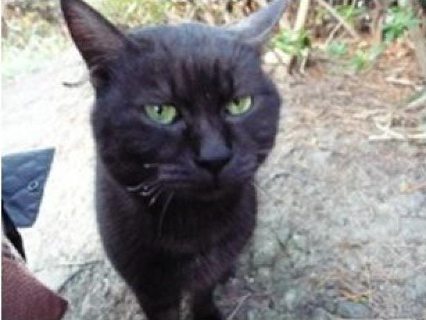 向かって左側のヒゲが焼かれて縮れている黒猫ちゃん。