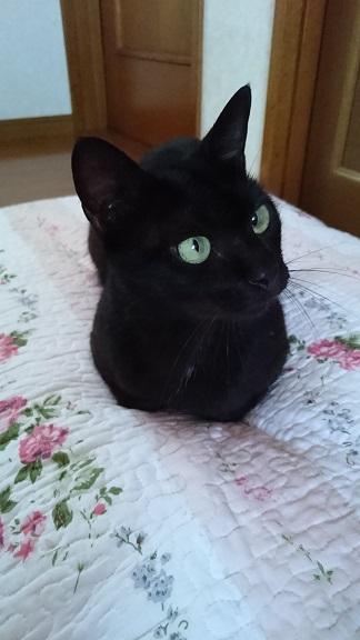 保護猫くろべぇ②