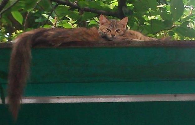 お母さんの背中に顔を乗せている近所で生まれた子猫ちゃん