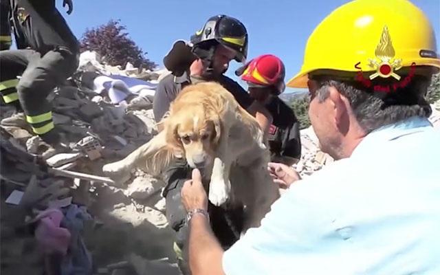 がれきの中から救出いた犬