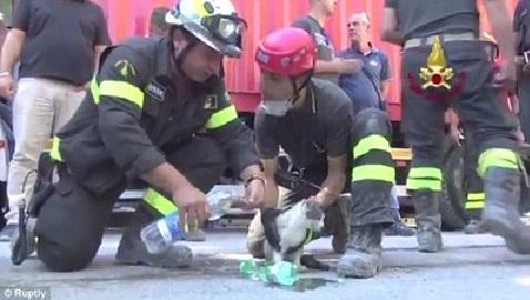 アマトリーチェで29日、がれきの中から救出された猫2