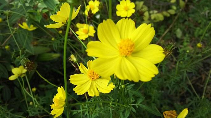ミーママの実家の庭に咲く可憐なお花達5