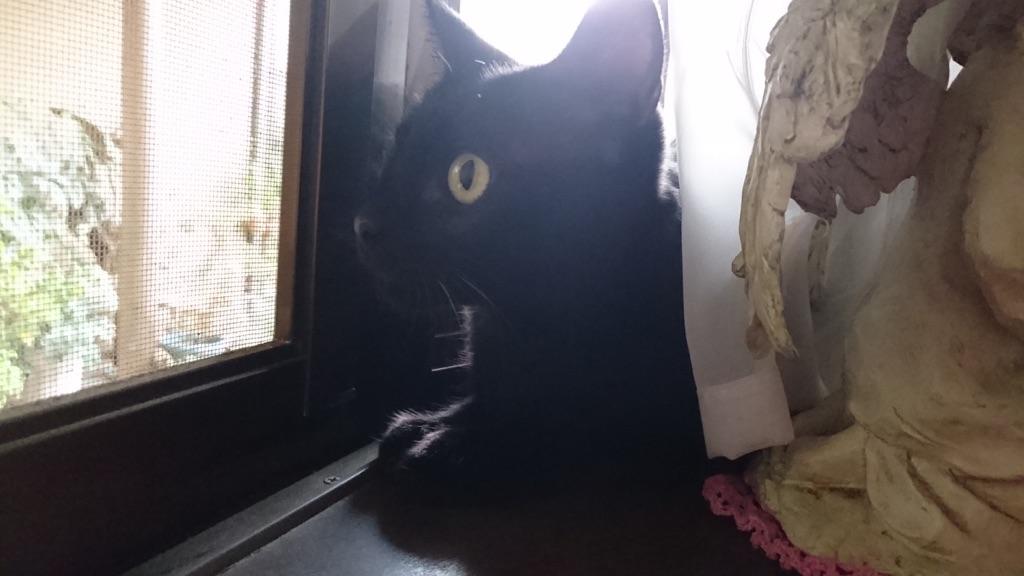 窓辺に佇む、らん丸