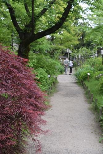 向島百花園6