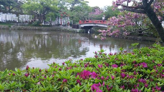 源平池の花と鳥