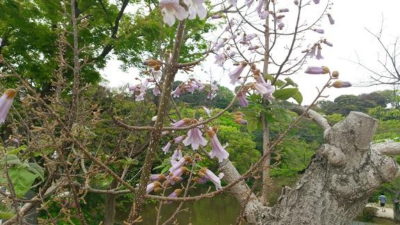 源平池をの望む花