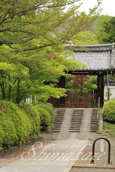京都旅行祇園建仁寺