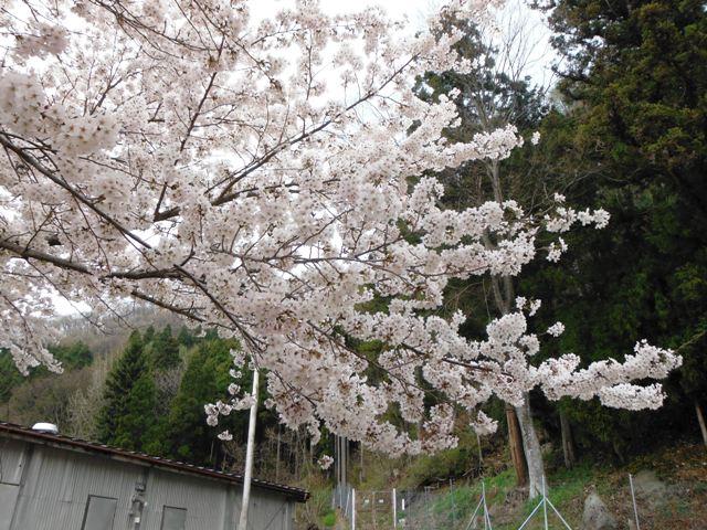 枡形城(高山村) (157)