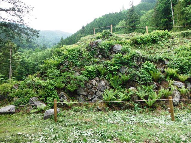 若澤寺後201606 (24)