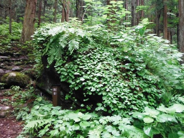 小菅山 (161)