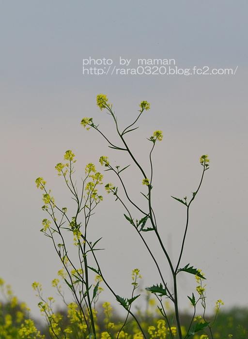 16A_7791 V