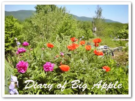 NY,庭の花たち