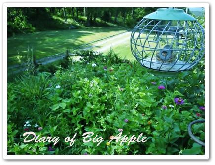 NYの庭は夏