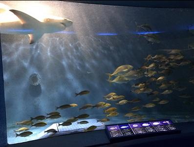360度水槽2