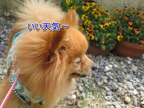 s-IMG_8919.jpg