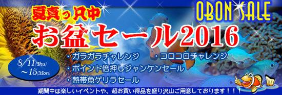 banner_obonsale-29cbf.jpg