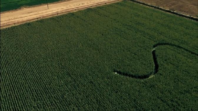 prcs1-car into corn