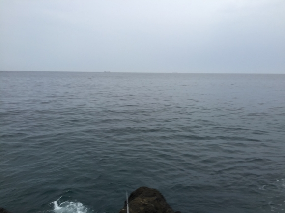南房総白浜の磯
