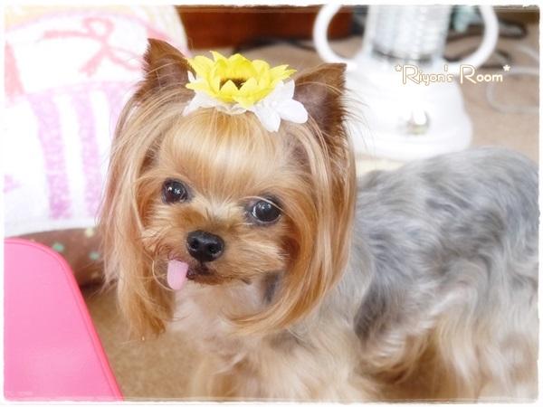 お花の髪飾り②
