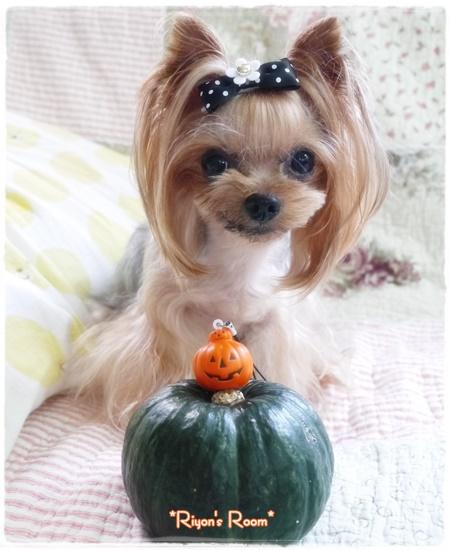 かぼちゃ⑤