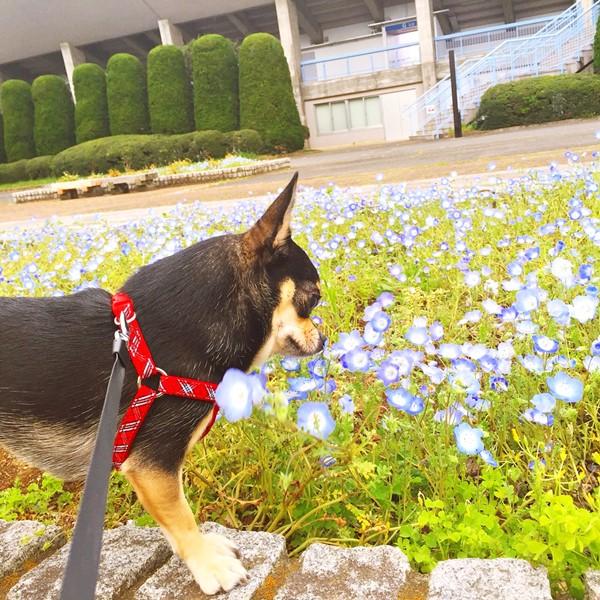 2016-05-04 ちまき ブログ用