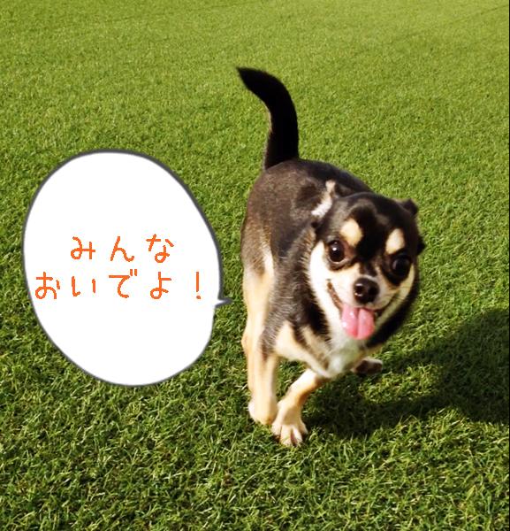 2015-11-19 ちまき