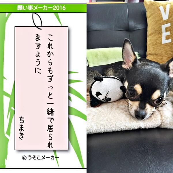 2016-07-11 ちまき ブログ用