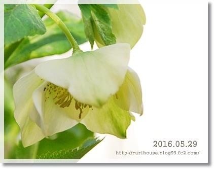 20160529-1.jpg