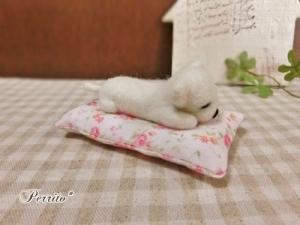 6月眠りチワワ2