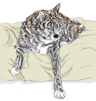 ふぶベッド