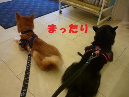 blog11034.jpg