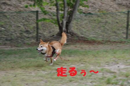 blog11050.jpg