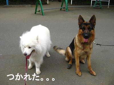 blog3371.jpg