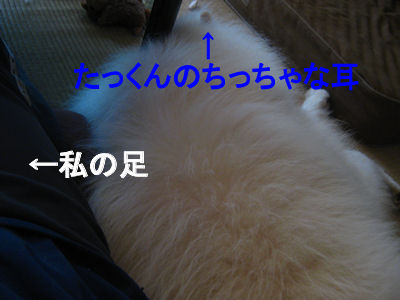 blog3448.jpg