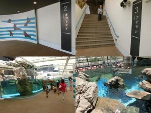 京都水族館6