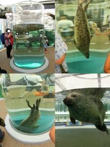 京都水族館8